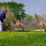 Les revenus du tourisme en Afrique plombés par la chute des monnaies locales