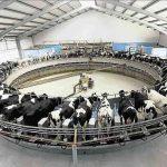 L'Allemagne octroie une aide d'urgence de 100 millions d'euros aux producteurs laitiers allemands