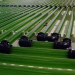 Le nouveau carburant qui va changer l'avenir de l'humanité : la micro-algue