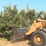 Colère: Les arboriculteurs n'en peuvent plus de la concurrence espagnole.