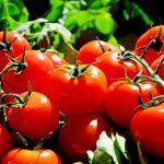 Bill Bonner: Washington contre les tomates