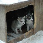 Chaque niche fiscale abrite un chien qui mord !