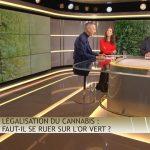 """Olivier Delamarche dans C'EST CASH: """"Légalisation du cannabis: faut-il se ruer sur l'or vert ?… Évitez de prendre un petit pétard à la fin de cette émission !!"""""""