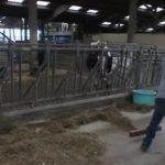 Val-d'Oise: témoignage d'une agricultrice en colère et en détresse…