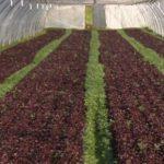 Agriculture: manque de main-d'oeuvre criant pour les récoltes !
