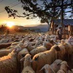 La fabrique à moutons, debout ou à genoux, à vous de choisir
