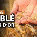 Thami Kabbaj: «Le blé indispensable pour notre vie, vaudra-t-il bientôt plus que l'or ?»