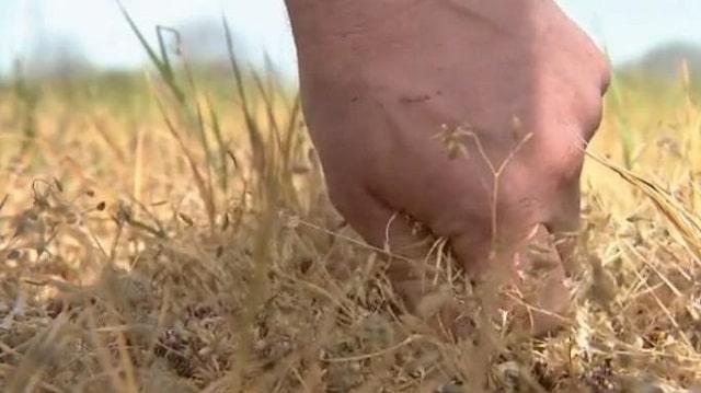 Doubs: les agriculteurs en difficulté à cause du confinement et de la sécheresse. C