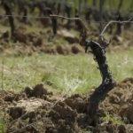 Coronavirus: l'inquiétude des viticulteurs…