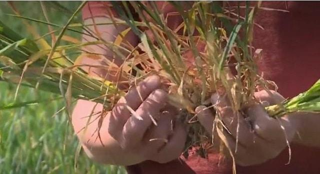 Agriculture: la sécheresse menace une grande partie du territoire