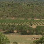 Sécheresse: les agriculteurs payent la facture