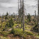 Sécheresse: la menace pèse sur les forêts françaises