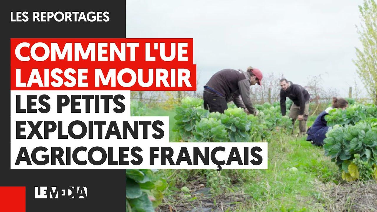 comment-l-ue-laisse-mourir-les-petits-exploitants-agricoles-français