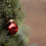 Noël: les producteurs de sapin sont très inquiets !